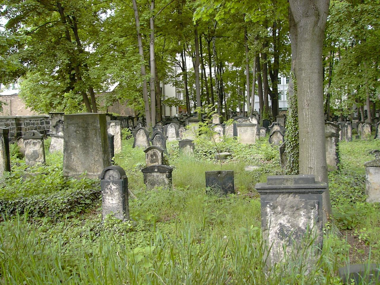 Stary żydowski cmentarz w Dreźnie